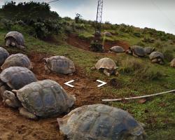 Galapagos Tortoise Google Street View
