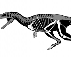 Diagram of the T. rex skeleton