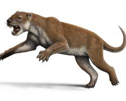 Reconstruction of Thylacoleo