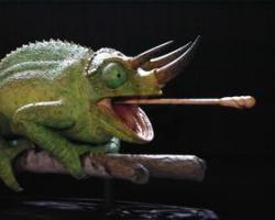 Tongue extension in the Three-horned Chameleon