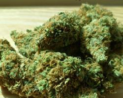 Dried marijuana leaves