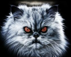An angry cat with glaring red eyes