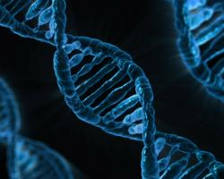 Cognitive decline may be influenced by interaction of genetics and... worms