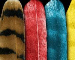 feather colors