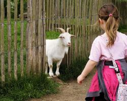 Goat looking at little girl
