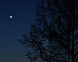 Moon above the trees