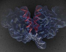 Scientists crack the structure of HIV machinery