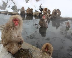 Macaques. CREDIT: Andrew_t8 / Pixabay (CC0)