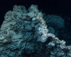 World's oldest animal, a giant sponge