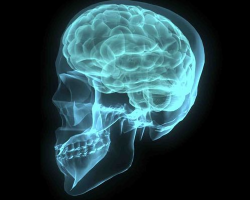 Computer-generated image of a human skull and brain. Blue.