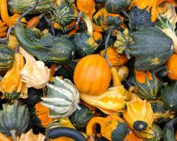 Gourds and pumpkins at autumn. Thanksgiving