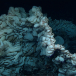 World's oldest animal, a giant sponge
